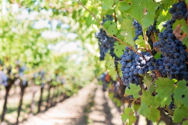 ¿Qué hace que un vino tinto sea bueno?