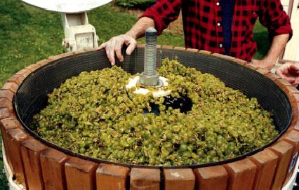 ¿Cómo se elabora el vino blanco?